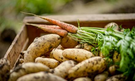 Une agriculture 100 % bio en 2050 ?