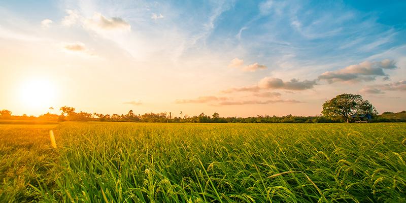 La fertilisation des sols en voie d'être modulée