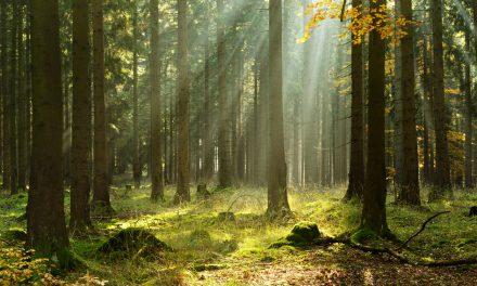 Opération Reboisement : 1 contrat souscrit, 1 arbre planté