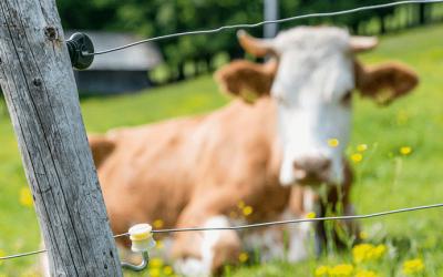 Des clôtures électriques connectées